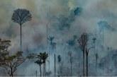 Amazonas |  En busca de grandes plantaciones