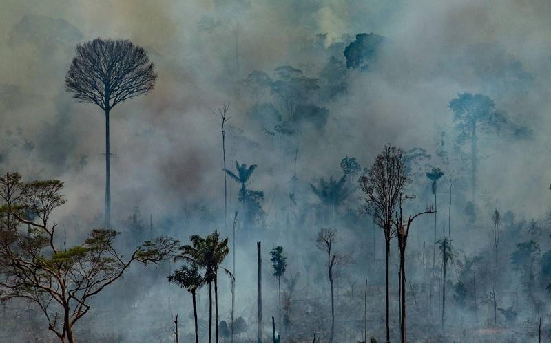Amazonas    En busca de grandes plantaciones